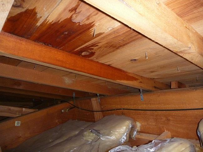 屋根裏雨漏りの画像